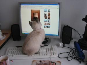 Pawsense, un logiciel révolutionnaire pour protéger nos ordinateurs contre les pattes de nos chats