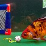 Apprendre des tours à un poisson rouge, c'est possible !