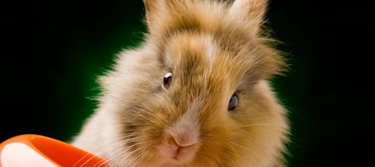 Alimentation : comment nourrir nos lapins aux différents stades de leur vie ?