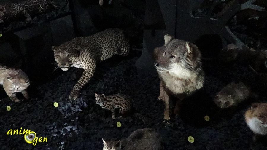 image animaux nuit