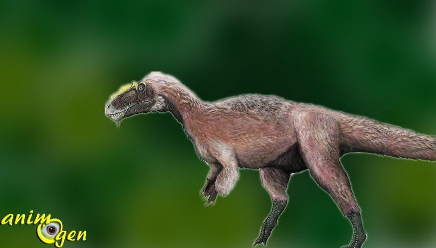 A la découverte du tyrannosaure à plumes ! (Yutyrannus huali, tyran à plumes)