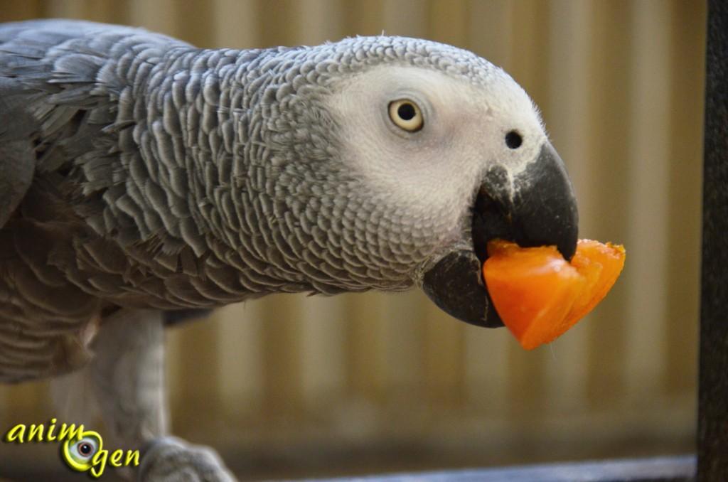 L'abricot, un fruit d'été pour perroquets vitaminés
