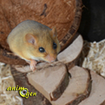 Cabane perchée en noix de coco pour rongeurs (fabrication,tutoriel,test)