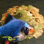 Les différents types d'aliments des poissons d'eau douce