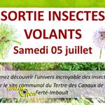 Sortie insectes volants à La Ferté Imbault (41), le samedi 05 juillet 2014