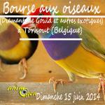 17 ème Bourse aux Diamants de Gould et autres oiseaux exotiques à Torhout (Belgique), le dimanche 15 juin 2014