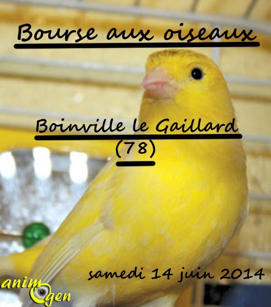 Bourse aux oiseaux à Boinville le Gaillard (78), le samedi 14 juin 2014