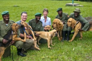 Les chiens du Parc des Virunga traquent les braconniers au Congo