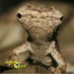 Reptiles : le plus petit caméléon au monde vit à Madagascar