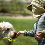Comportement : comment aborder un chien inconnu ?