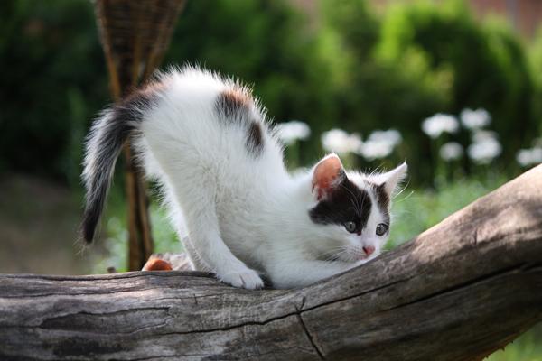 Comportement : les chatons durant leur croissance (de la naissance à la maturité sexuelle)