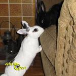 Comment apprendre la discipline à nos lapins de compagnie (ne pas ronger, gratter, creuser) ?