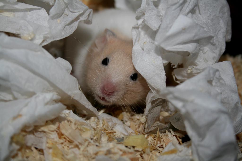 Quel matériau faut-il utiliser pour garnir le nid de nos rongeurs ?