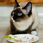 Alimentation : comment nourrir les chattes durant la gestation et l'allaitement des chatons ?