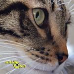 L'humeur du chat, baromètre de son comportement