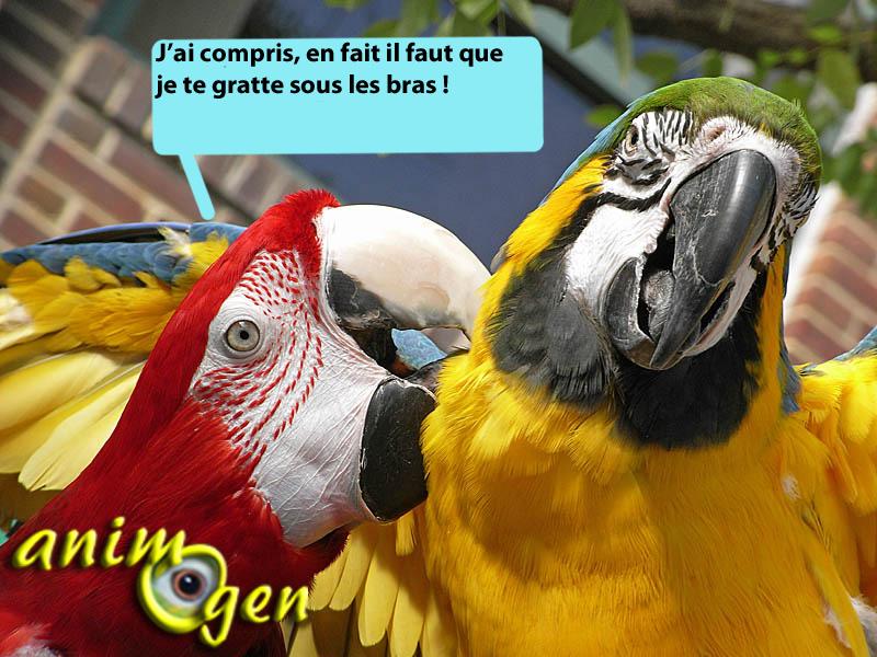 Education : pourquoi faut-il toujours donner le même nom aux objets en parlant à nos perroquets ?