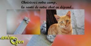 Le risque de lymphome malin lié à la présence de fumée de tabac dans l'environnement du chat