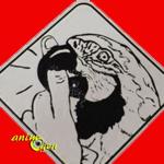 """La """"morsure"""" chez le perroquet : la comprendre et y remédier"""