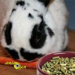Quelles portions de graines, granulés et aliments frais donner à un lapin nain ?