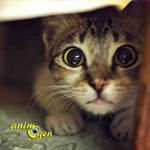 Comportement : la peur des inconnus chez les chats, 2 ème partie (causes, symptômes, solutions)