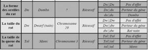La reproduction des rats : croisements, hérédité et génétique