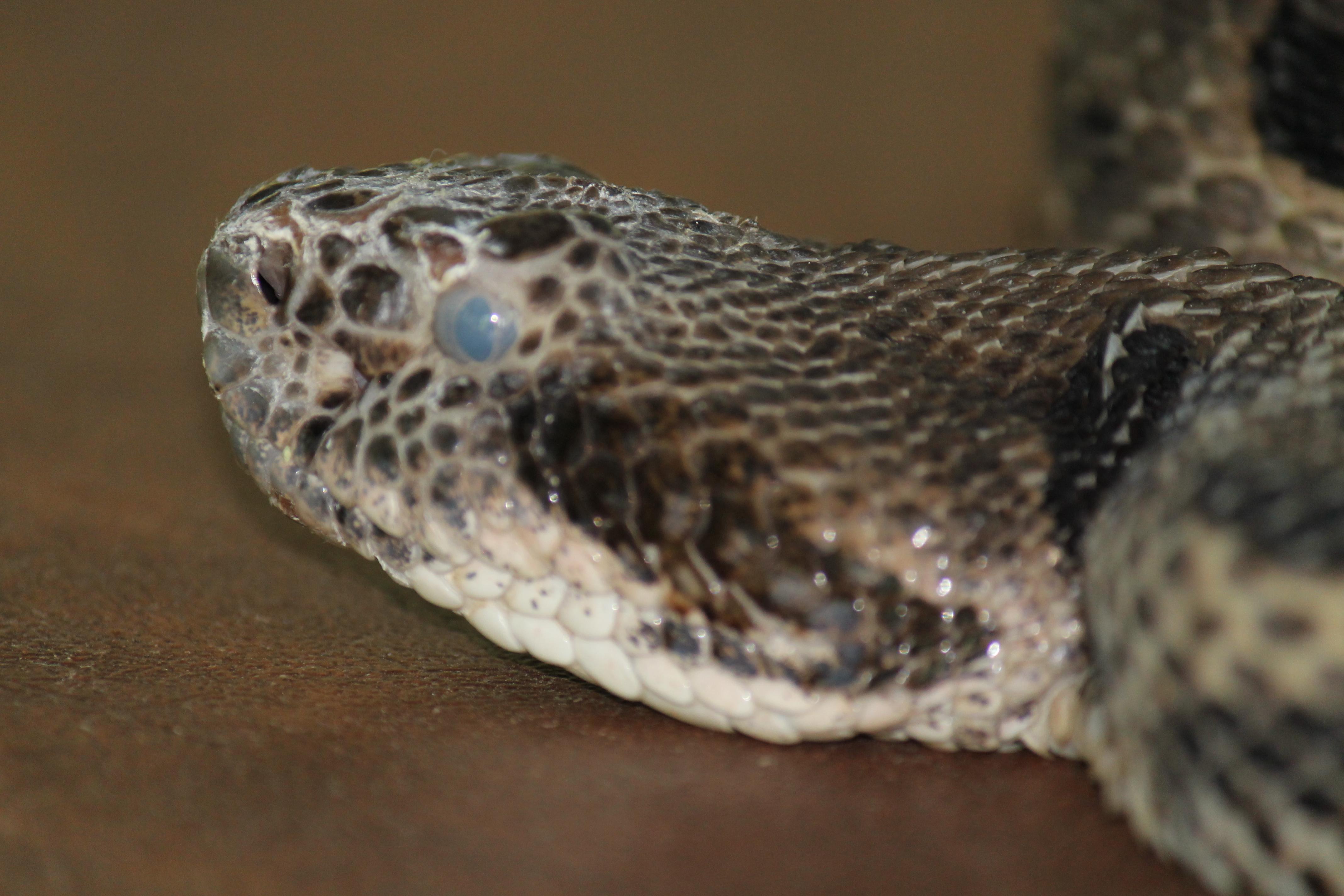 santé-critère-espèce-serpents-maladie-parasite-problème-signe-symptômes-reptiles-NAC-animal-animaux-compagnie-animogen-terrarium-