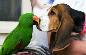 Comportement : l'importance du tempérament dans le choix d'un perroquet