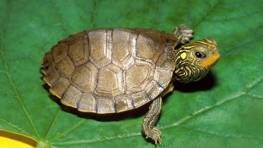 Les tortues d'eau ont-elles besoin d'exercice ?