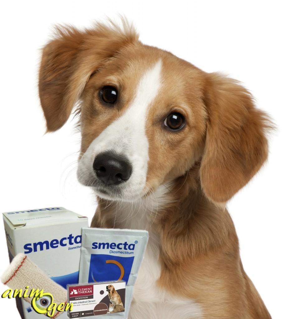 Premiers soins : la trousse à pharmacie du chien