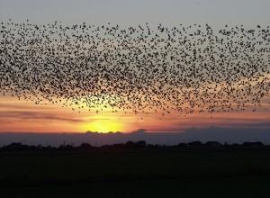 La pollution lumineuse, ou l'effet papillon sur la faune nocturne