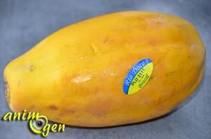 Alimentation : les atouts de la papaye pour nos perroquets