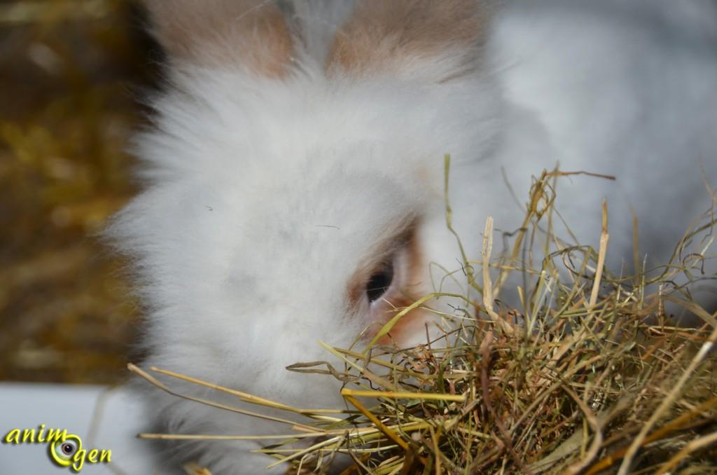 Alimentation : l'importance du foin pour nos lapins de compagnie