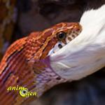 Les problèmes d'alimentation chez les serpents en captivité