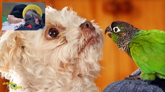 Santé : chien et perroquet, accident et conséquences...