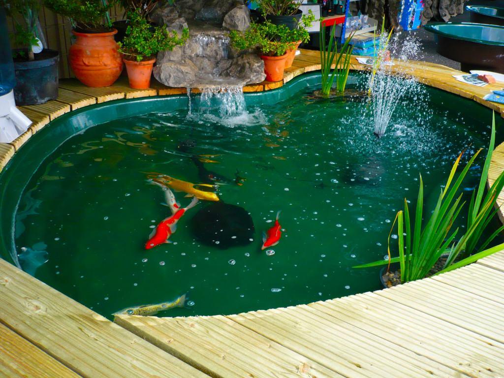Quelles esp ces de poissons peut on accueillir dans un for Outdoor fish pond setup