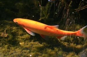 Quelles espèces de poissons peut-on accueillir dans un bassin ?