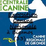 4 ème Exposition canine nationale à Biganos (33), le dimanche 27 juillet 2014
