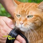Apprenez à brosser votre chat pour rendre ce moment agréable