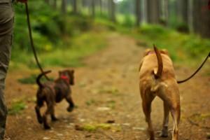 Comment choisir le chien idéal ?