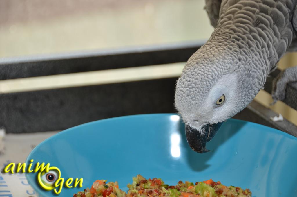 """Le """"chop"""" , une révolution culinaire américaine pour mieux nourrir nos perroquets"""
