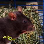 Alimentation et foraging : botte de foin pour rongeurs et lapins Hanseaten (Vitakraft)
