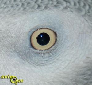 Perroquets et perception : l'instinct et les sens