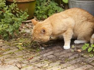 L'intoxication chez le chat : comment réagir en cas d'urgence ?