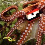 Deux idées de jouets à fabriquer pour une pieuvre en captivité