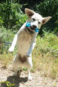 Jouet os pour chien Orka (Petstages)