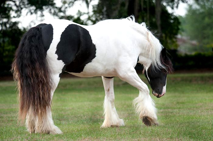 Langage corporel : que nous dit notre cheval avec ses membres ?