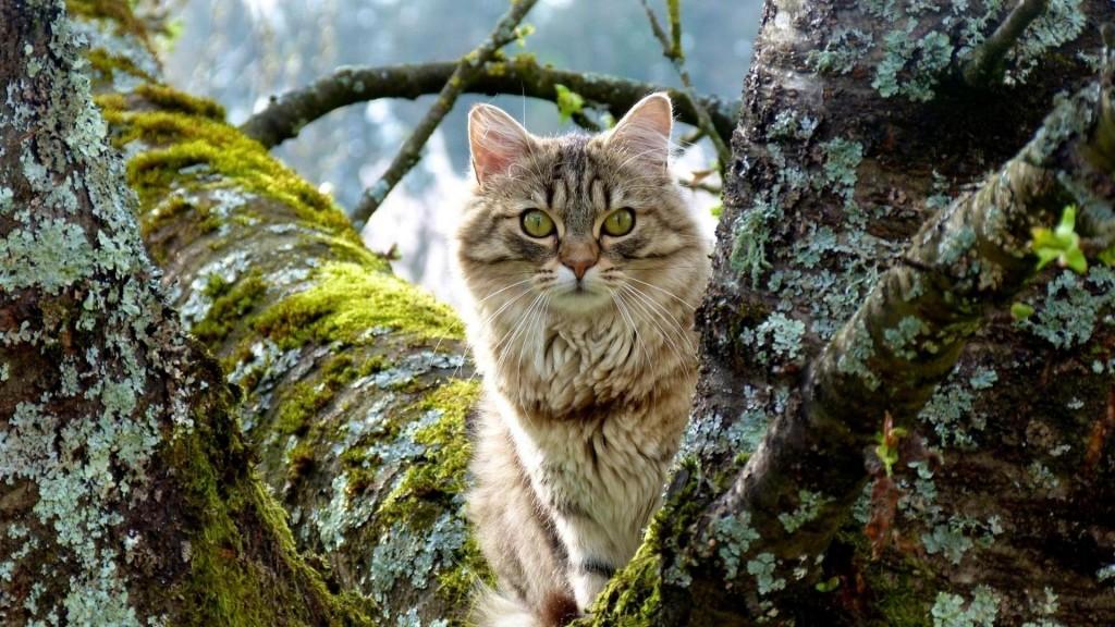Comment retrouver un chat perdu par le profilage félin ?