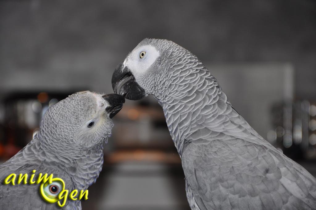Comment se passe la reprodution chez les oiseaux ? - Blog