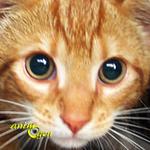 Santé : la stérilisation ou la castration précoce chez le chat est-elle risquée ?