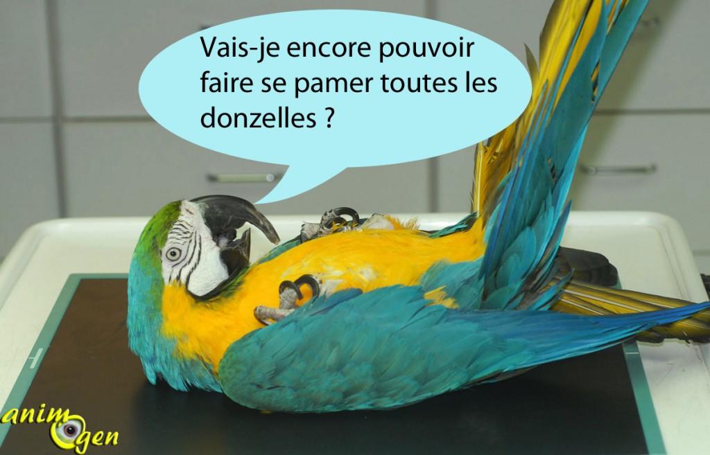 Reproduction : peut-on stériliser les perroquets mâles et femelles ?